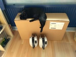 Kat bewaakt collectebus